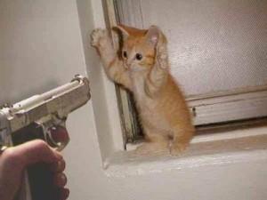 gun cat